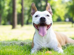 Pet Food Manufacturer Adding +150 Jobs