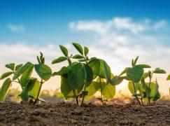 $32M Soybean Processing Plant Expansion Concludes