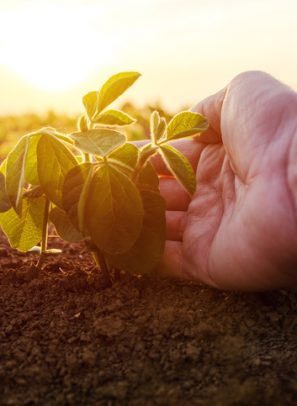 PNW Researchers Awarded $1M Grant for Advanced Ag Tech