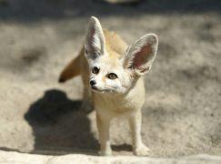 Indiana's Oldest Zoo to Undergo Major Upgrade