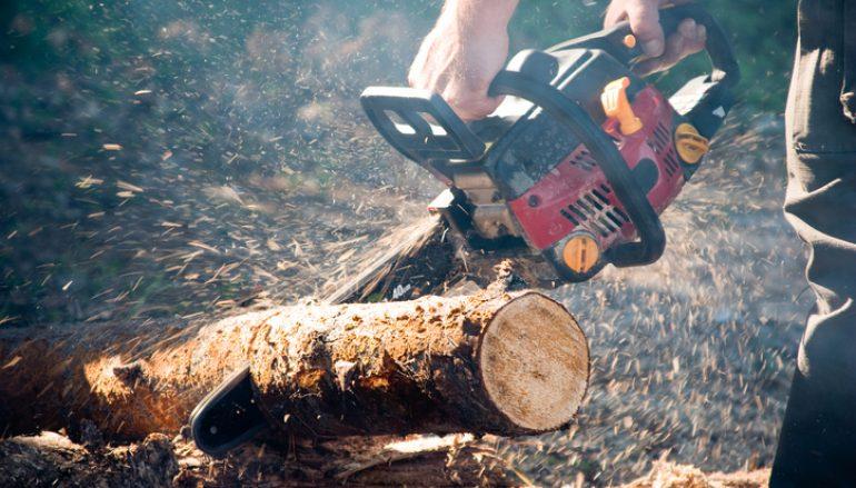 Indiana's Got Wood