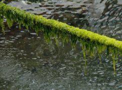 Partners to Battle Toxic Algae, Phosphorus Pollution