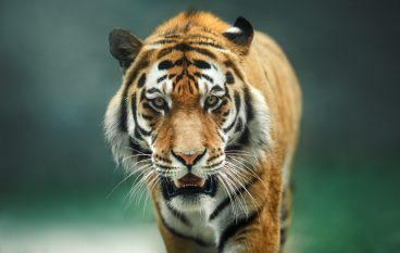 Global Center for Species Survival Adds Team of Experts