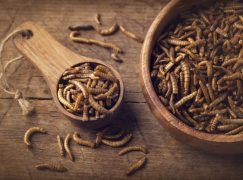 Addressing Food Shortages with Insect Farming
