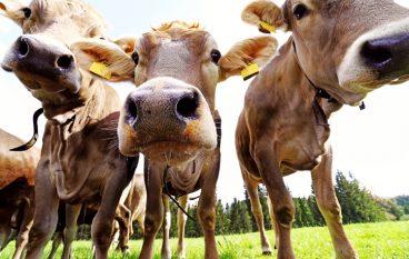 New Livestock Waste Treatment Facility is No B.S.